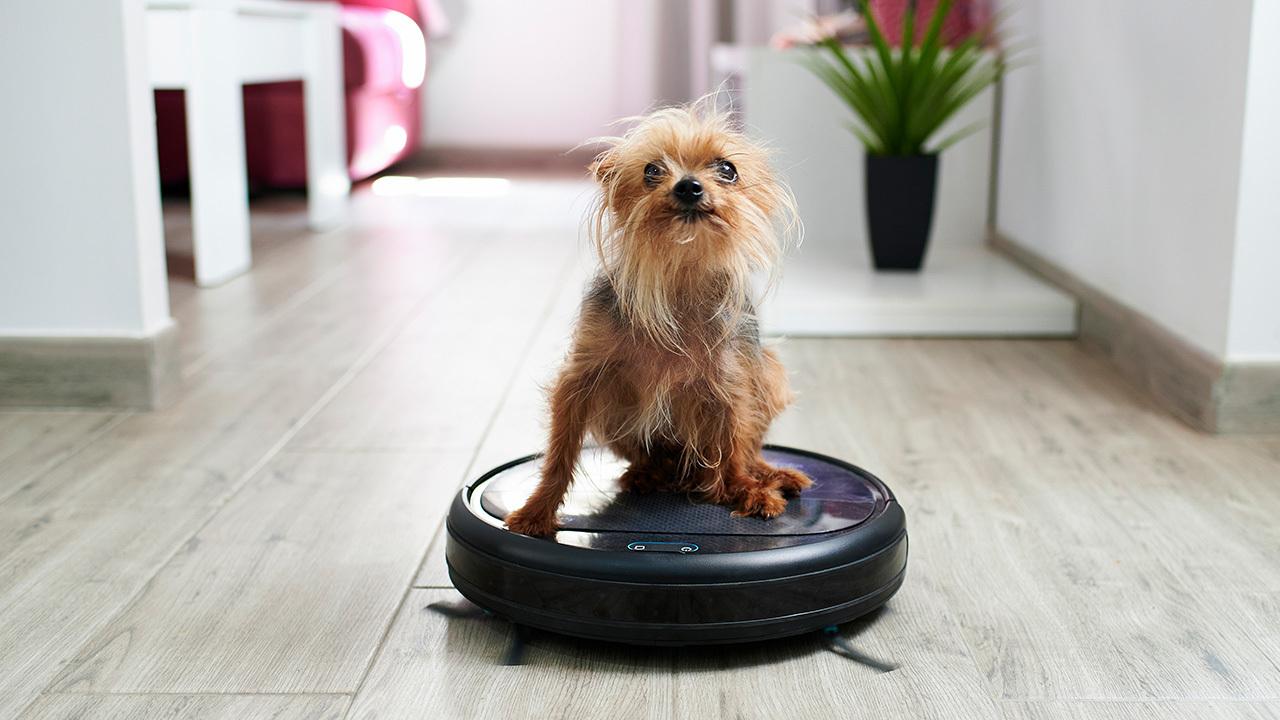 Bên cạnh ưu điểm dọn sạch nhà, robot hút bụi còn trang bị cả webcam cho phép quan sát từ xa thú cưng trong nhà.